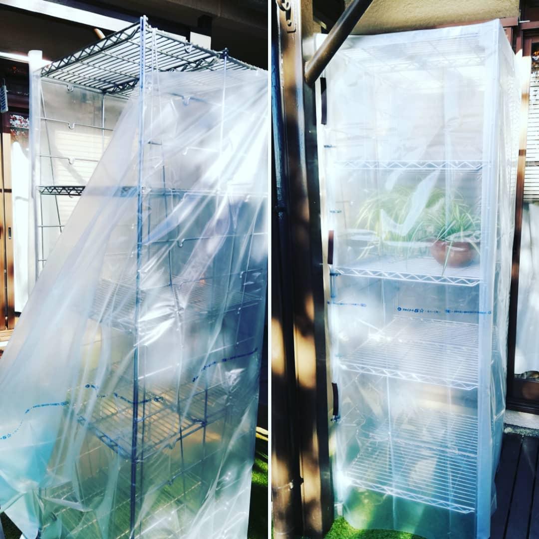 我が家のキッチンで使ってた、エレクターを 庭で温室にリメイク!  シートを使ってカバーを作りました。 ↑  アイデア 夫  高いところのみ施工 私  今ある温室のカバーを買い換えるよりもお安くできました。 ナーンと 5分の1でしたよ。